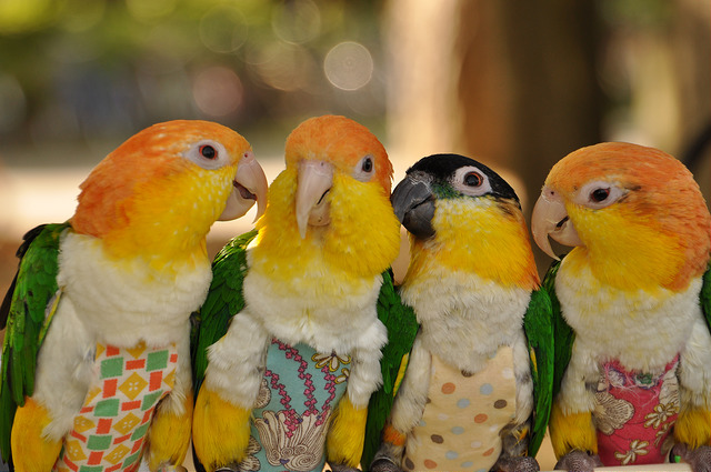 12 STEPS TO A HAPPY HEALTH PARROT