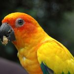Protecting the pets' digestive system with 6 best food for parrotlets