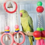 Parrot Cage review